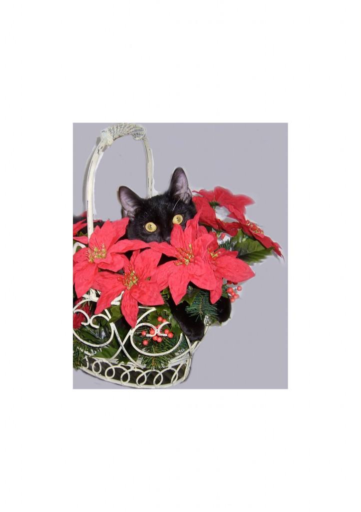 Dr. Saathoff – Katzenpsychologin » Blog Archiv » Weihnachtsgeschenke ...